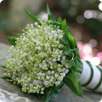 Lily of the Valley symbolizes a return to happiness.